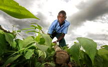 A young boy on a vegetable field. (Source: Alexander Volkmann)