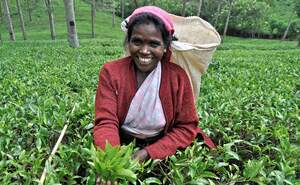 Sri Lanka: Education for tea pickers' children